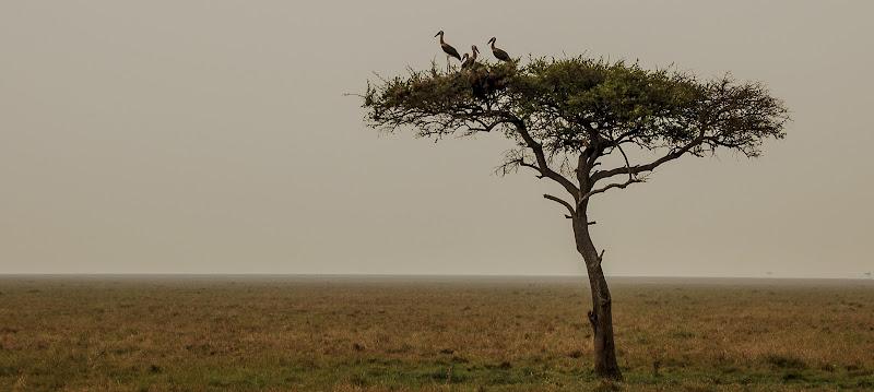 Atmosfere Africane  di pieralisa