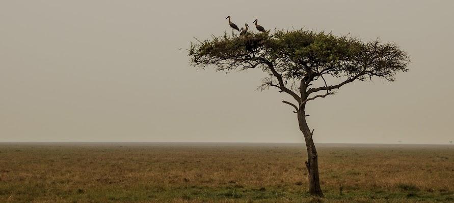 Atmosfere Africane