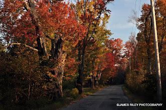 Photo: Happy Avenue in Autumn 001