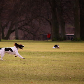 by Luz UK - Animals - Dogs Playing (  )
