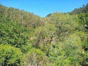 Photo: Willow tree