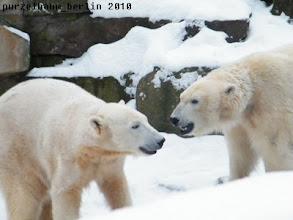 Photo: Was planen Knut und Gianna jetzt ?