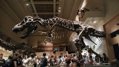 Photo: Тиранозавр, Музей естественной истории