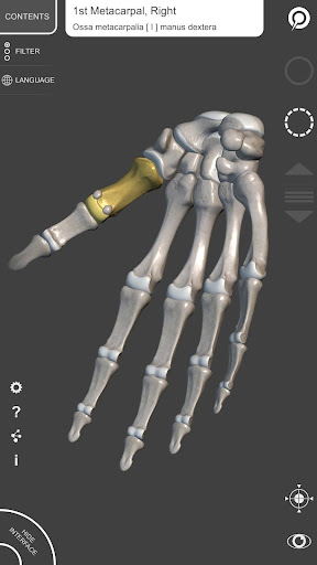 3d anatomy for artists