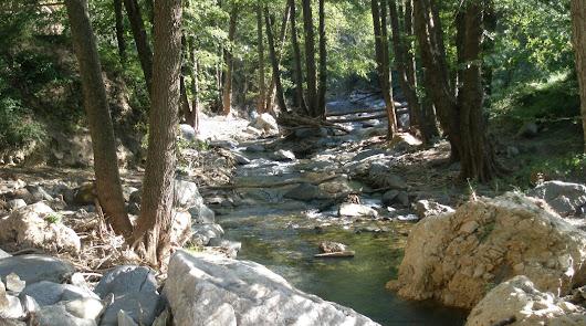 El Grupo Ecologista Mediterráneo pide cuidados para las masas forestales