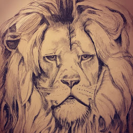 King of the Jungle by Selene Andreasen - Drawing All Drawing