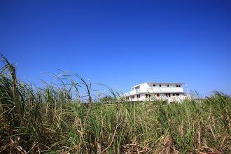 Photo: サトウキビ畑から見た海ん道