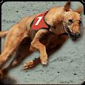 Greyhound Dog Racing 3D icon