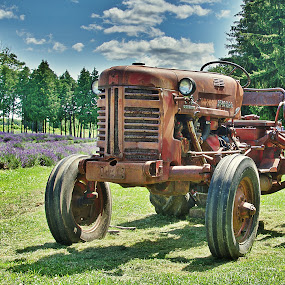 Tractor at Rest by Rebecca Roy - Transportation Other ( countryside, field, lavender field, hdr, red tractor, lavendar, lavender, tractor, lavendar field, country,  )