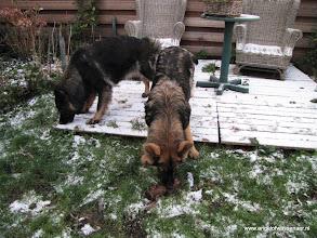 Photo: Aiki eet sneeuw