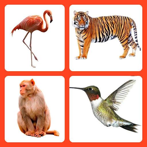 Animals Birds - App for Kids