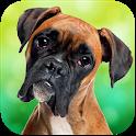 Boxer Dog Simulator icon