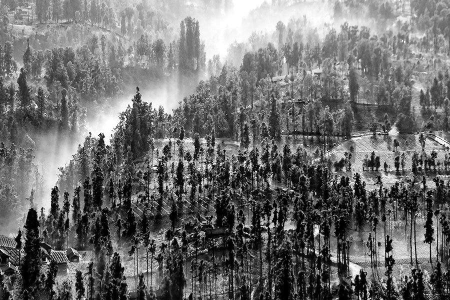 Misty morning in BW by F.N. Hendrawan - Landscapes Prairies, Meadows & Fields ( foggy, bw, trees, pwcbwlandscapes, misty )