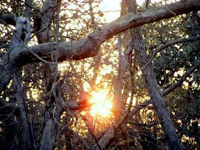 Photo: The sunrise over Gir in Gujarat