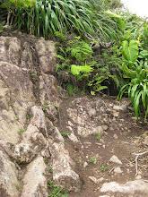 Photo: Rotsen met groen