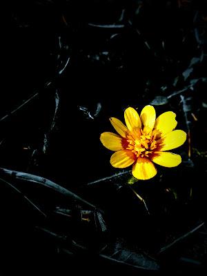 Piccolo fiore di Robyvf