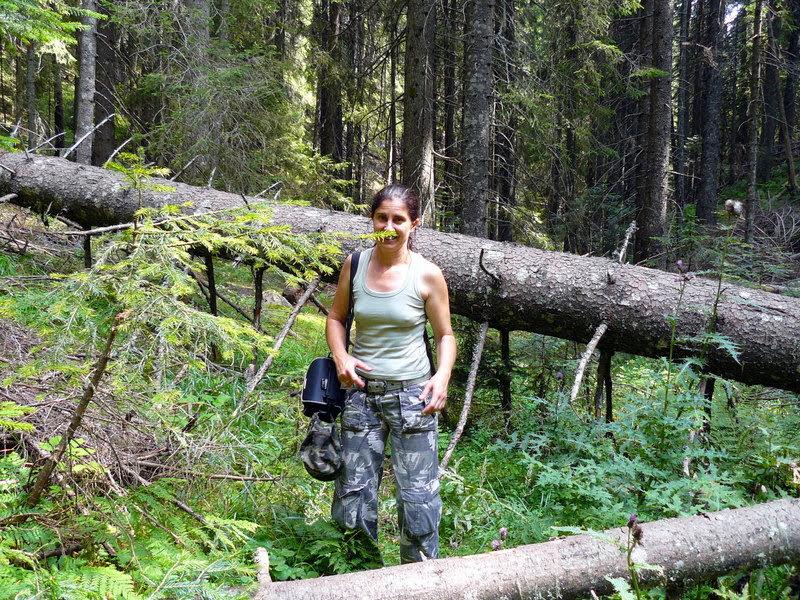 Разходка из родопската гора
