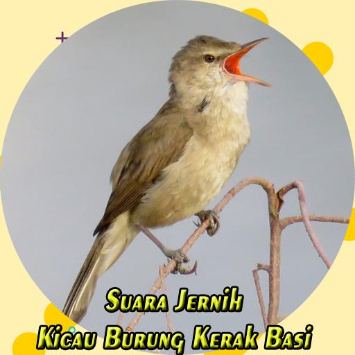 2020 Mp3 Kicau Burung Kerak Basi Jernih Android App Download Latest