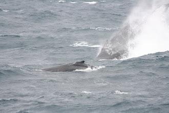 Photo: Whales!