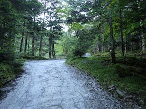 苔むした林床を見ながら進む