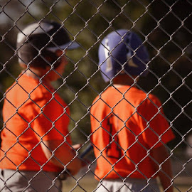 Buddies by Britney Harrison - Sports & Fitness Baseball (  )