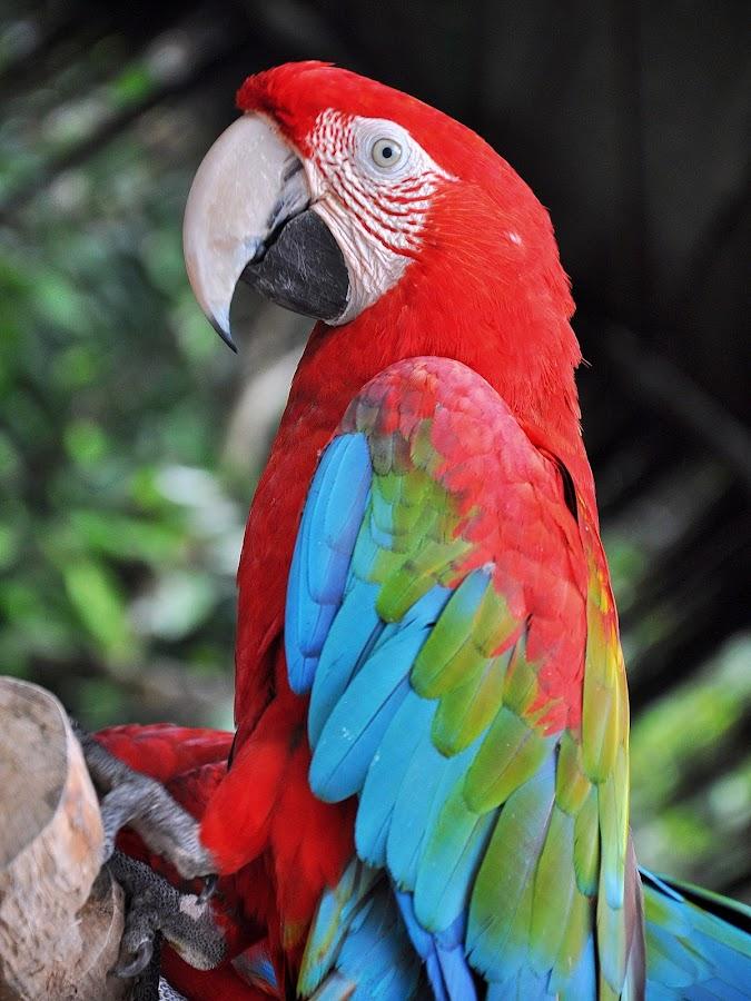 by Fendy Tjandra - Animals Birds