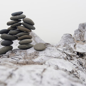 Rocks on Driftwood Beach by Dana Styber - Artistic Objects Other Objects ( beaches, artistic arrangements, driftwood, wood, nature, olympic national park, stones, rocks )