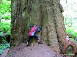Photo: (Year 2) Day 360 - Dee the Tree Hugger and Pippa at the Bottom of a Redwood (USA)