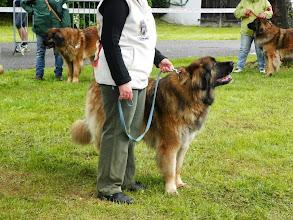 Photo: Cymba du Chateau Beausoleil (chien visiteur)