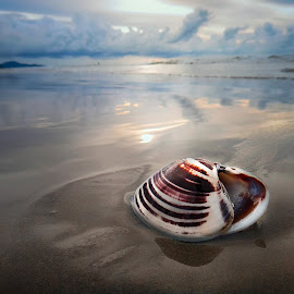 Empty Shell by the Beach by Ervin Moung - Animals Sea Creatures ( calm, shell, seashell, beach, evening,  )