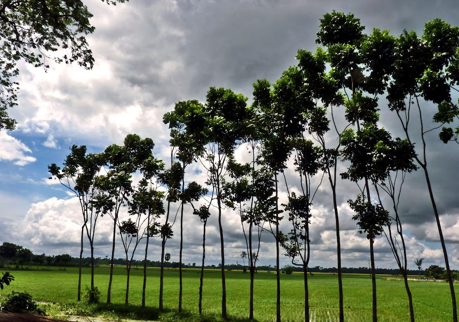 Green Field by Anupam De - Landscapes Weather