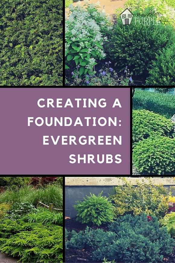 Creating a landscape foundation with evergreen shrubs | PrettyPurpleDoor.com