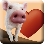 Cerdito in Love