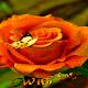 Orange Rose Butterfly LWP (app)
