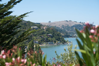 Photo: Mediterranean climate on Paradise Dr around the Tiburon peninsula