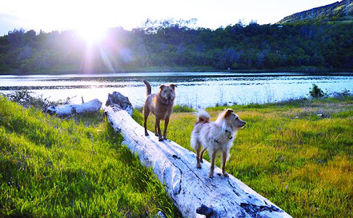 4 Dog Walk Approaches to Add Enjoyment