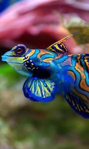 fish swimming live wallpaper screenshot 0