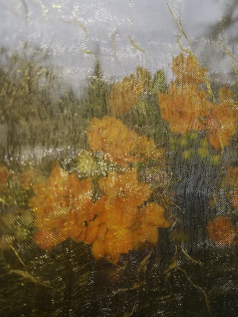 Dietro la tenda il fiore arancione di Robyvf