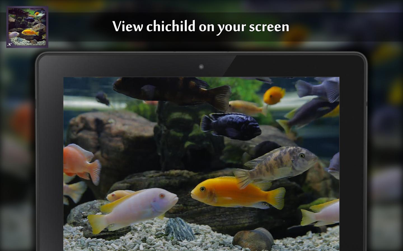 Fish aquarium in rawalpindi - Chichild Fish Aquarium Screenshot