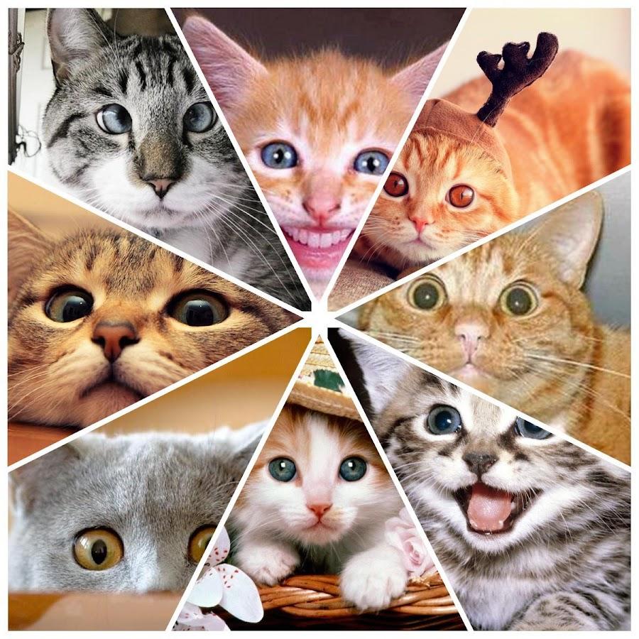 Gambar Kucing Lucu Apl Android Di Google Play