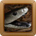 Black Mamba Snake Wallpapers icon