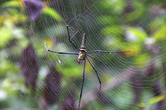 Photo: Day 241 - Horrid Spider I Nearly Had in My Hair (Vietnam)