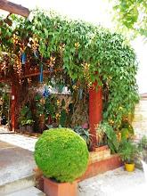 Photo: Olhando a partir do café, o caramanchão coberto de sapatinhas de judia. http://celiamartins.blogspot.com/