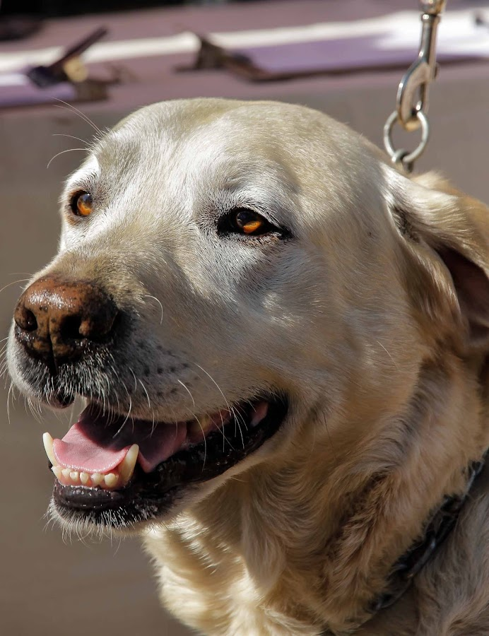 Doggies by Willie van der Merwe - Animals - Dogs Portraits
