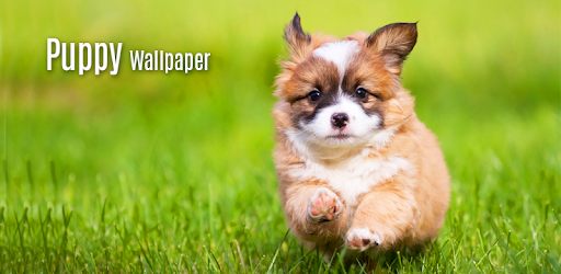 Puppy Wallpaper - Apps on Google Play