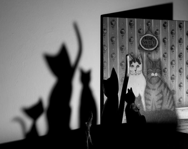 L'ombra sinuosa del gatto di Barbara Surimi
