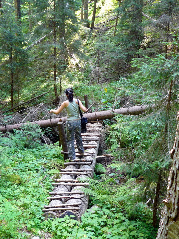 Мостче в гората