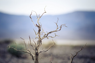 Photo: Me Time Death Valley, CA. 2012.  I love this photo, not because of what it is, but what it reminds me of. We had been shooting as a group for a few days, and now were walking towards a salt basin were +Brian Matiashhad spotted some water. I saw this little branch and the mountains behind it, and decided to have a seat on the desert floor and just take my time, the group went on ahead and soon I was alone.  I took my time, setup the tripod, pick a lens (my favorite 80-200 f2.8), took my time focusing (manual focused), then took about 10 frames. I think I must have taken about 5 or 8 minutes getting all this done, and it was so nice, I enjoyed every second of silence, the sound of the wind broken by the sound of the shutter every once in a while.  It reminded me of what I really love about photography, it gives me a chance to put everything else aside, and just concentrate on one thing, making a single image. -- Once done I packed up and rejoined the group and the group antics that were going on, fully refreshed.  #dvonewaytrip