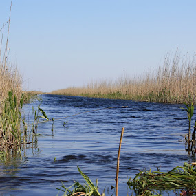 Danube Delta - raw beauty by Simona Hatieganu - Nature Up Close Water