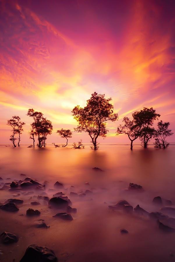 Laguna Beach by MUSE ROCK - Landscapes Sunsets & Sunrises
